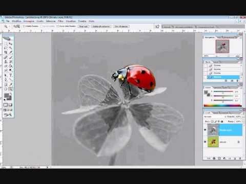 Photoshop: Creare immagini in bianco e nero con particolari colorati