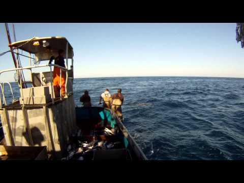 Commercial Tuna Fishing on the Malaga 2012