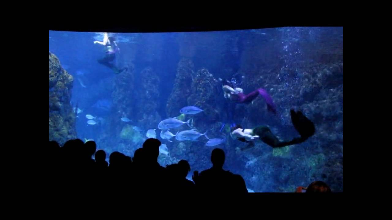 Mystic Mermaids Downtown Aquarium Denver Youtube