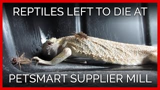 Reptiles Left to Die at PetSmart Supplier Mill