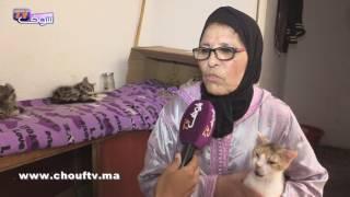 شوفو سيدة من فاس كيفاش كتعامل مع قطة مربيَها عندها 20 عام (فيديو) | بــووز