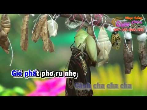Karaoke - Con Bướm Xuân - DJ.