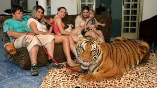Family Share Home With Pet Tigers ..