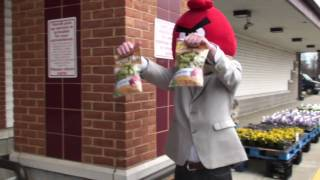 Angry Birds Pork Rinds
