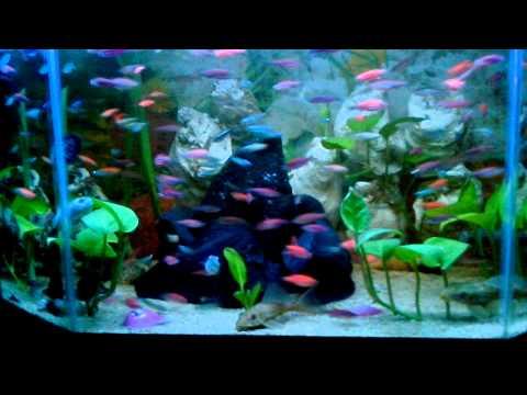 Ikan hias air tawar 2