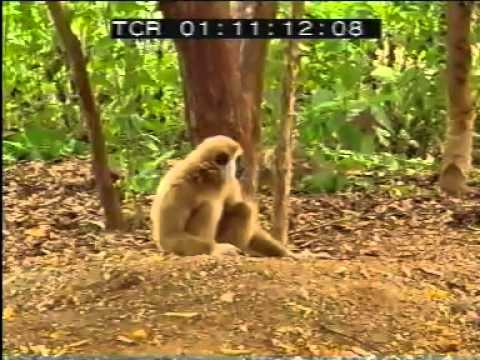 Tiger and Monkey Fight Funny Funny Videos,