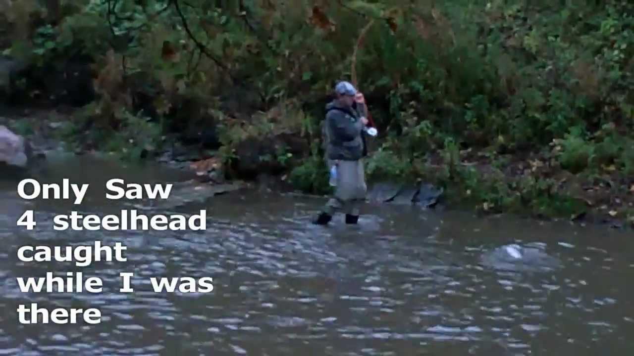 Steelhead fishing erie pa walnut creek 10 14 2011 youtube for Steelhead fishing pa