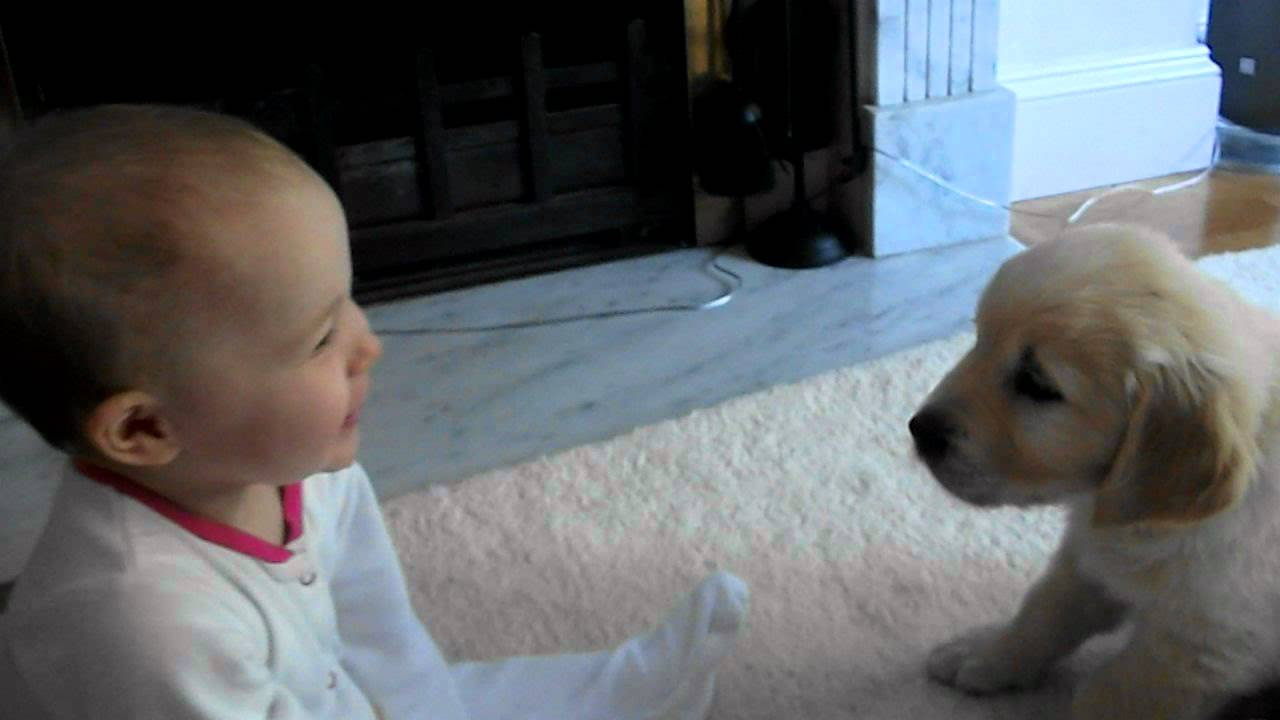Baby And Puppy Meet For The First Time Youtube