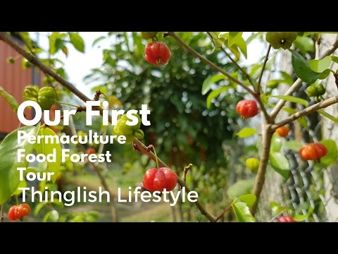 Our First Permaculture Food Forest Tour - Thinglish Lifestyle