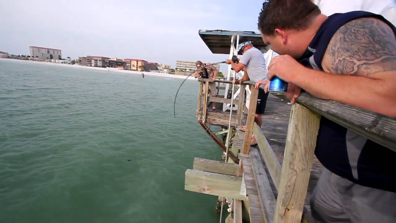 Shark fishing in madeira beach fl youtube for Florida fishing license lookup