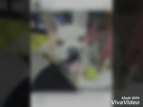 Hình  ảnh về chú  chó  choin của kelvin khánh