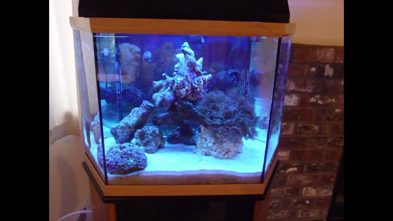90 Gallon Saltwater Aquarium Setup 1000 Aquarium Ideas