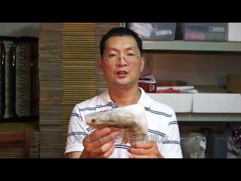 海鮮宅配蝦子 超大明蝦 活凍斑節蝦 解凍方法