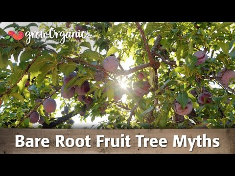 Bare Root Fruit Tree Myths