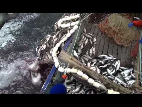 Salmon seining prince William sound 2013 f/v five brothers