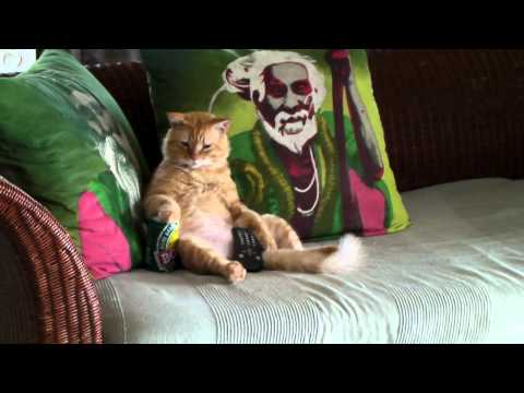 image vidéo Le chat le plus drôle du monde