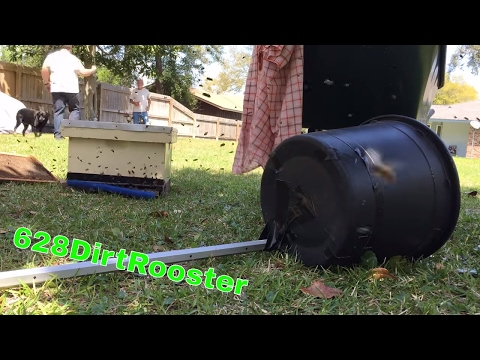 We Dropped Bees From A Magnolia Tree And The Dog Loved It!  Swarm Capture With A Rottweiler