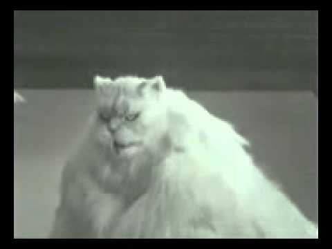 Fat Cat Youtube | the great canadian big fat cat youtube ...
