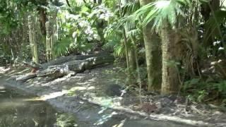 Jungle Cruise Magic Kingdom Walt Disney World