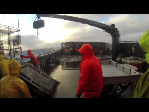 Bering Sea Opilio Crab Fishing 2013