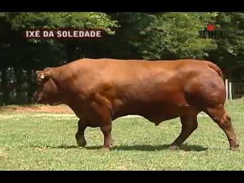 Ixé Soledade - SEMEX