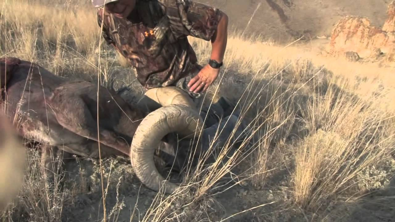 Ca bighorn hunt of a lifetime 2012 part 3 youtube for California lifetime fishing license