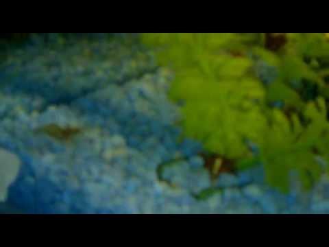 Pecera Tropical(plantas artificiales)