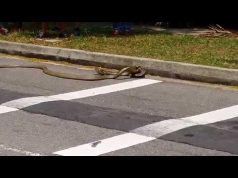 بالفيديو: معركة دامية بين جوج د لحناش بالشارع العام