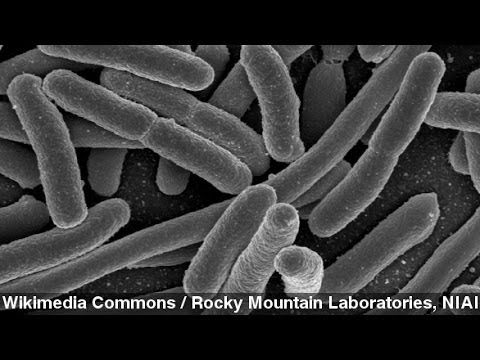How Quickly Does Gut Bacteria React To Diet Change?