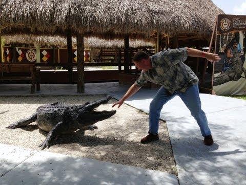 Шоу с аллигаторами. Индейская Деревня. Экскурсии в Майами - экскурсии 2013