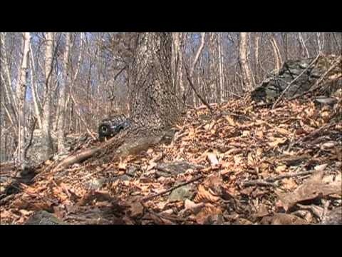 Axial Wrangler and Honcho Almost Lost in the Woods #2