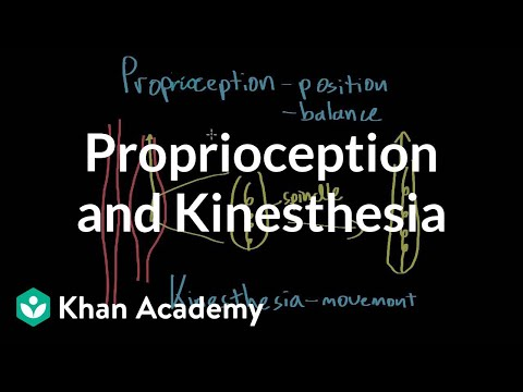 Proprioception And Kinesthesia