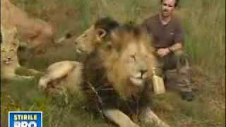 Unbelievable The Real Lionman Kevin Richardson With 38