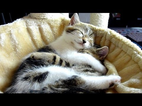 Top 20 Kitten and Cat Hugs . Cutest Cats Moments., http://www.facebook.com/pages/Funnycatsandnicefish/505394342831444 Top 20 Kitten and Cat Hugs . Cutest Cats Moments.. New videos every Tuesday & Friday! Cute...