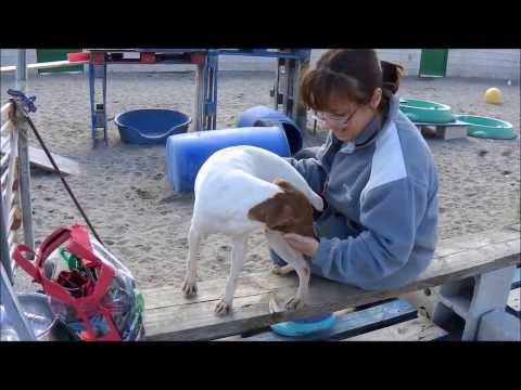 Animalinneed: Video of Barca and Sabine