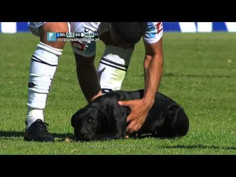 Куче влезе на фудбалскиот терен за малку галење и чешкање