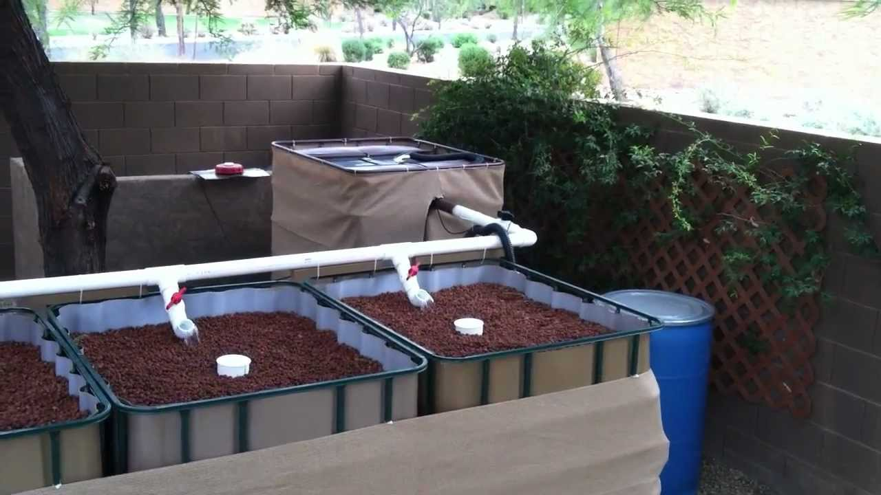 Aquaponics in arizona youtube for Arizona aquaponics