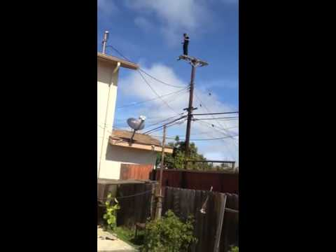 Dancing man rescued from Calif. power pole