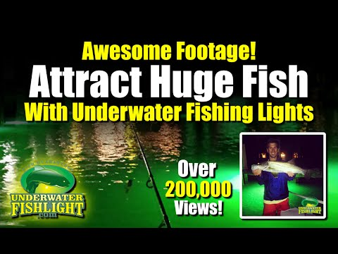 underwater fishing lights attract monster fish green. Black Bedroom Furniture Sets. Home Design Ideas