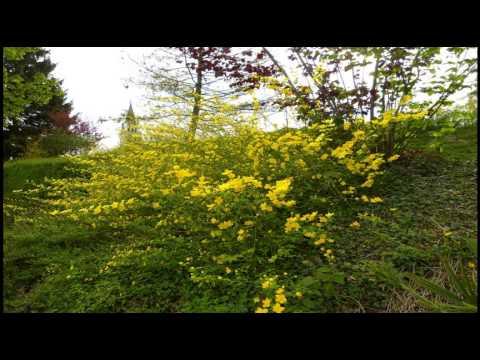 26. April 2015 Romanshorn am Bodensee
