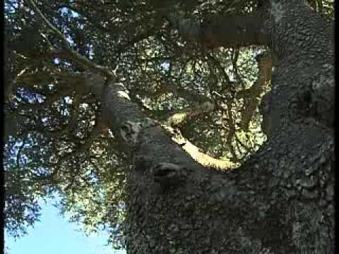 Dubai TV reportage about Shouf Cedar nature reserve