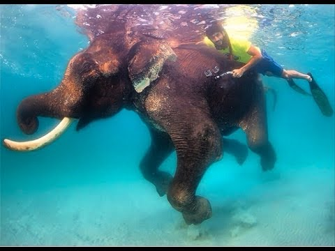 HH Sheikh Hamdan Goes Diving In Indian Ocean With Elephant 2014