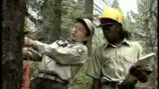 picture of Forestry Technician
