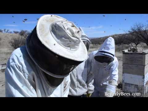 Dee Lusby Organic Beekeeper 2013