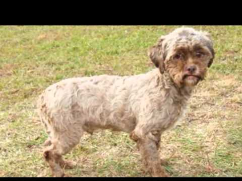 Meet Tonik, the Dog with a Human-Like Face