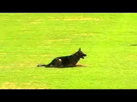 xem cho vui GSD thế giới   Diễn đàn chung   Hội chó béc giê Việt Nam