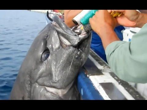 Đi câu ngoài biển vô tình bắt được con cá cực lạ và hiếm