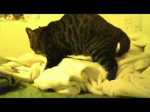 falling kittens