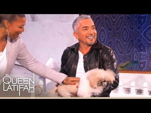 Cesar Millan Plays