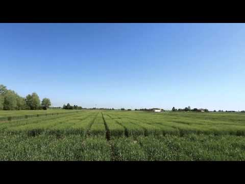 Barilla storie di grano: intervista a Mario Catania